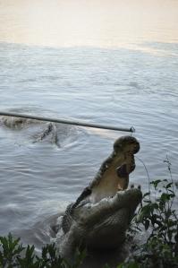 15-07-15 Jumping Croc 14