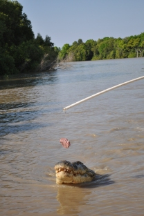 15-07-15 Jumping croc 6