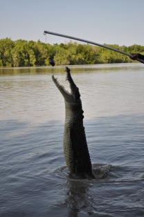 15-07-15 Jumping croc 8
