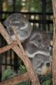 15-12-03 Aus Zoo 7
