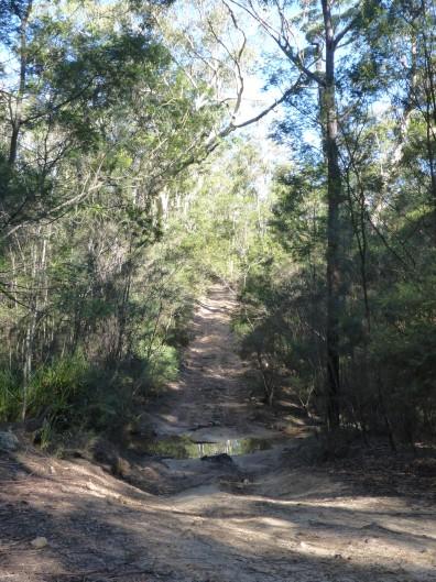 16-06-25 Mintbush Trail 1
