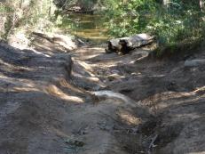 16-06-25 Mintbush Trail 2